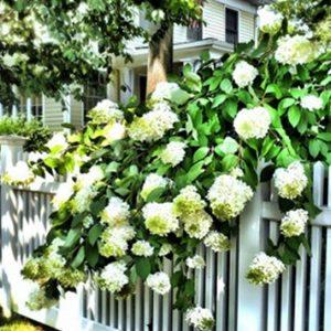 Mách bạn cách bộ trí hàng rào theo phong thủy, cách làm đơn giản tại nhà