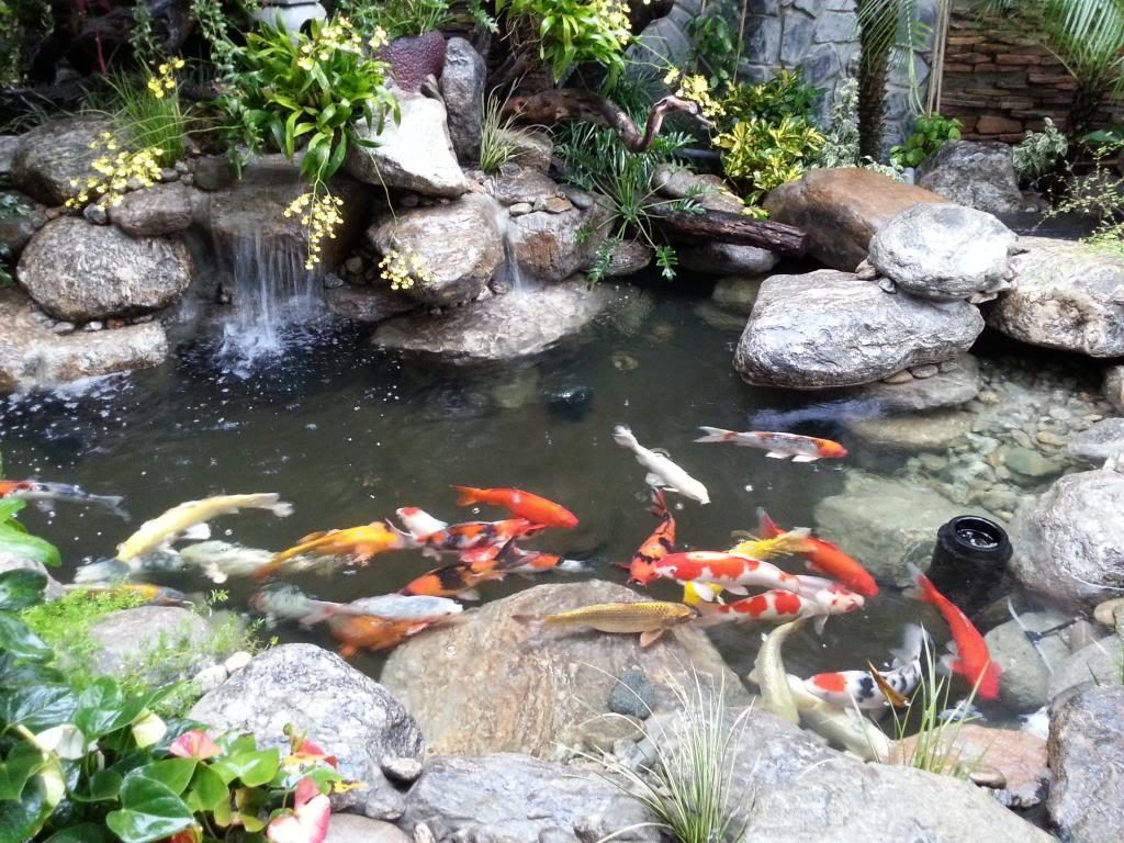 Mẫu thiết kế giếng trời đẹp kết hợp hồ cá koi và các loại cá bình thường khác, tùy thuộc theo sở thích, mong muốn và điều kiện của mỗi gia chủ mà sẽ có nhiều mẫu tiểu cảnh