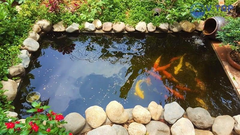 hồ cá Koi trên sân thượng