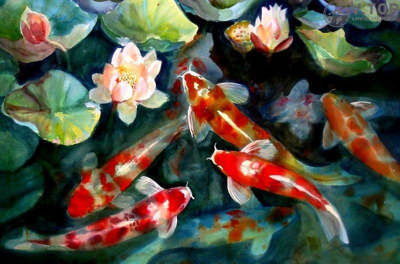 thiết kế thi công hồ cá koi mini