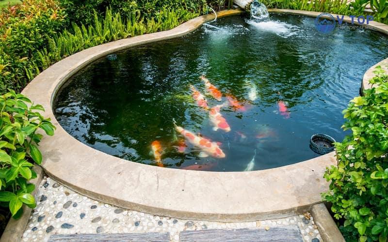 thiết kế thi công hồ cá sân vườn