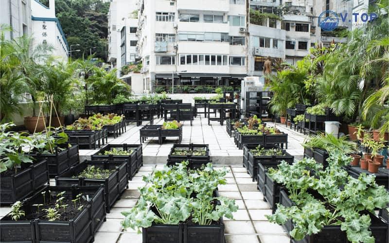 Thiết kế thi công sân vườn trên sân thượng