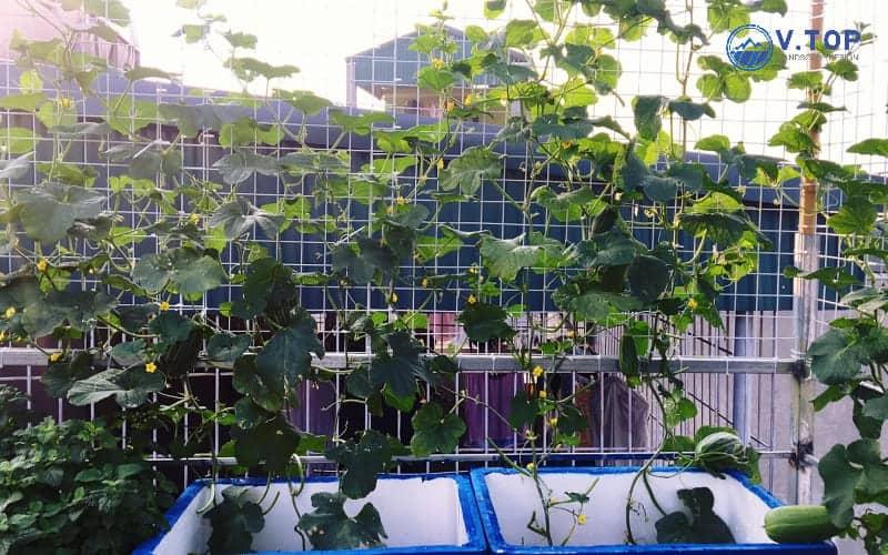 thiết kế thi công vườn trên mái nhà