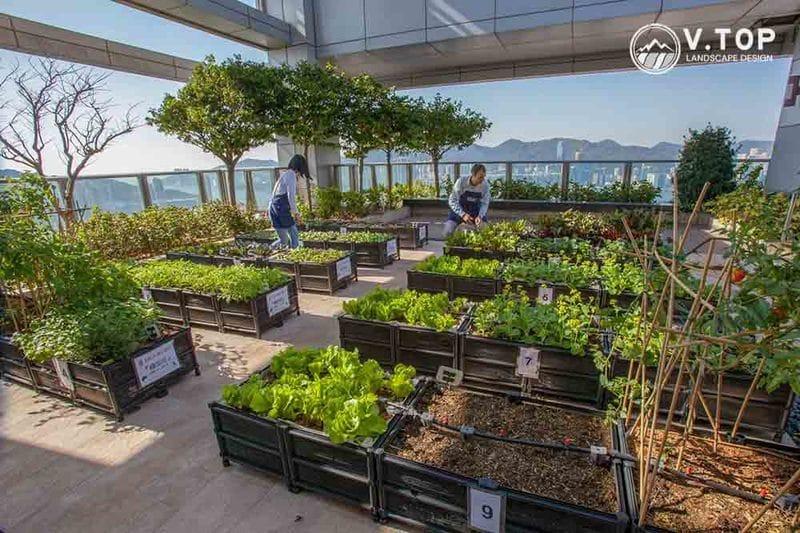 Trang trí sân thượng bằng vườn rau xanh