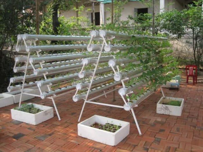 Trồng rau thủy canh giúp tiết kiệm nước, chi phí mua thuốc bảo vệ thực vật