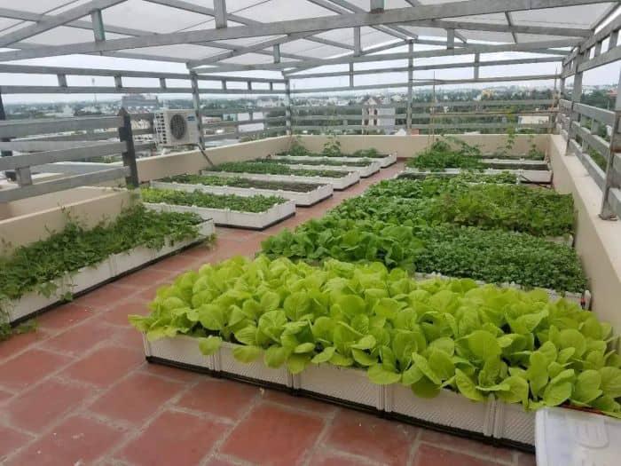 Thiết kế vườn rau trên sân thượng mang đến rất nhiều lợi ích cho gia chủ