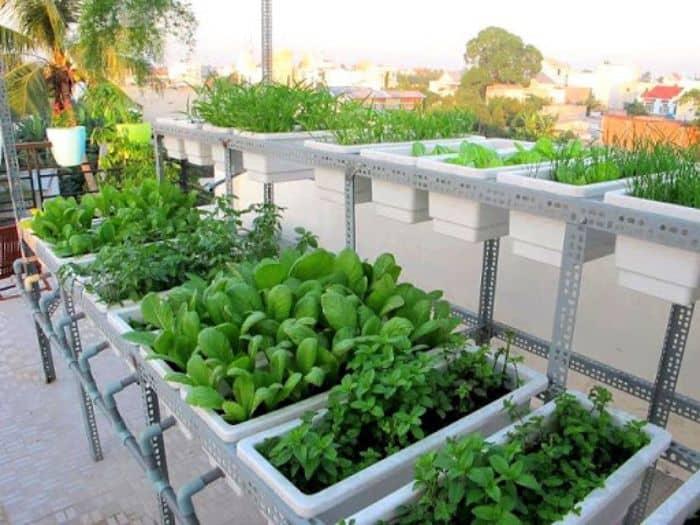 Không chỉ có lựa chọn vị trí trồng phù hợp mà bạn cũng cần phải quan tâm tới loại cây trồng