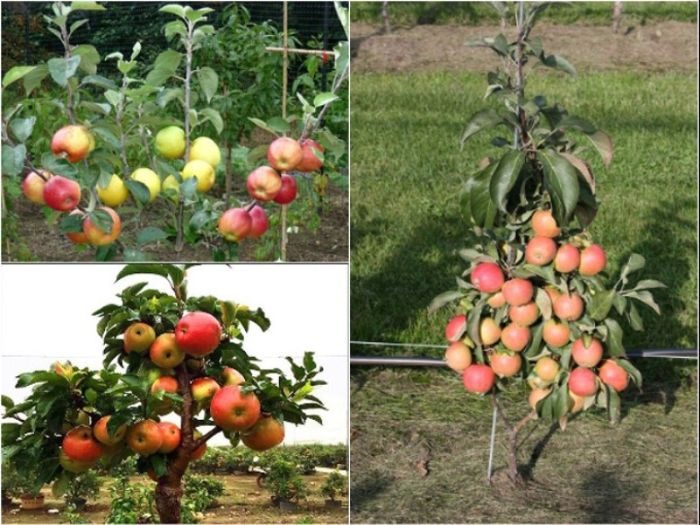 Đất trồng cây ăn quả trong vườn nhà phải có độ PH tiêu chuẩn từ 6-6.5