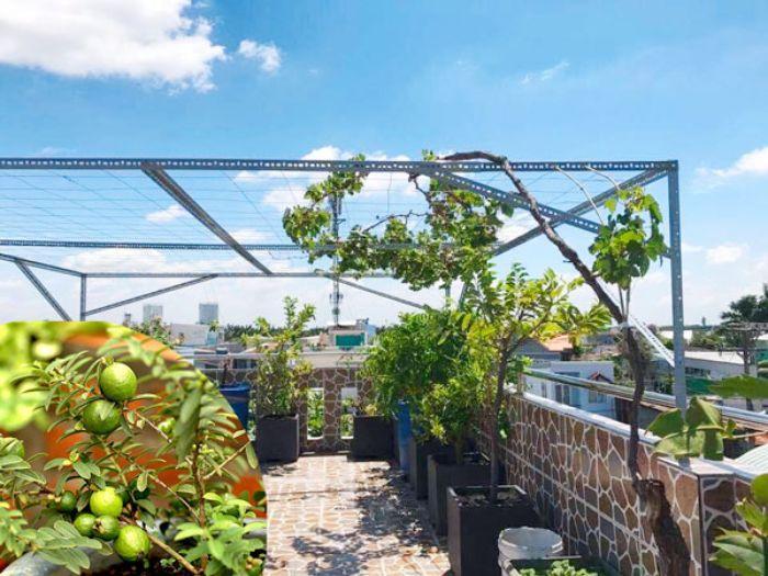 Khi trồng cây ăn quả bạn không nên sử dụng nhiều hóa chất trừ sâu bệnh hại