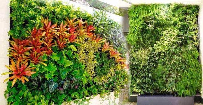 Mô hình vườn tường đứng đang được ứng dụng phổ biến trong các gia đình
