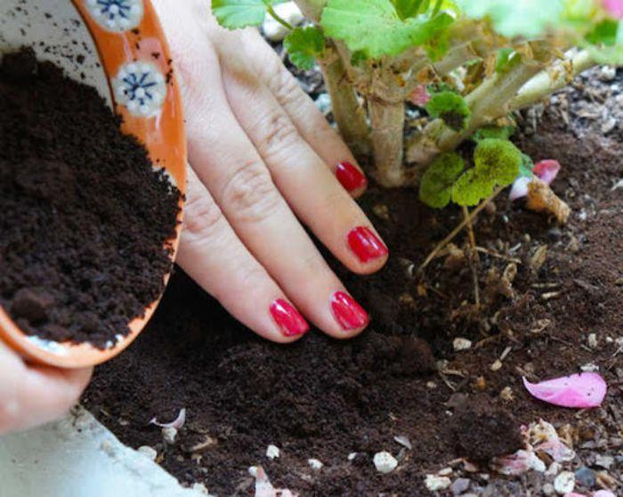Bón phân để cung cấp chất dinh dưỡng cho cây