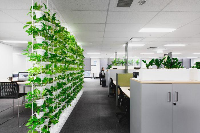 Cách chọn cây xanh trong phòng làm việc tùy theo từng không gian