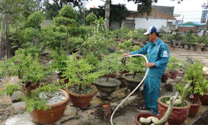 Tại sao nên chọn dịch vụ chăm sóc cho cây xanh?
