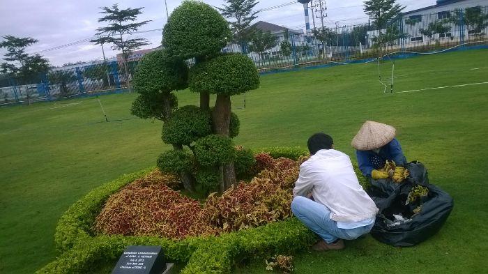 Nhổ cỏ dại để cây sinh trưởng tốt