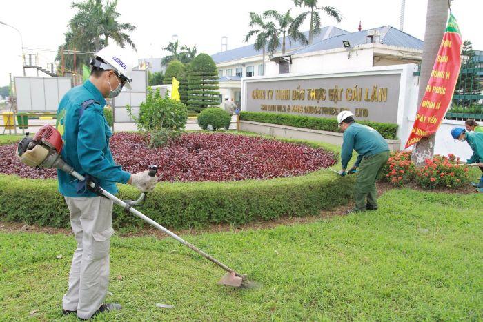 Địa chỉ cung cấp dịch vụ chăm sóc cho cây xanh