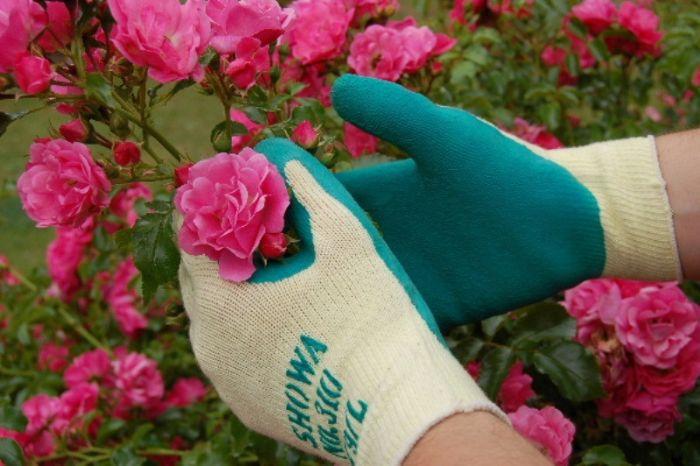 Găng tay là một trong những dụng cụ làm vườn không thể thiếu