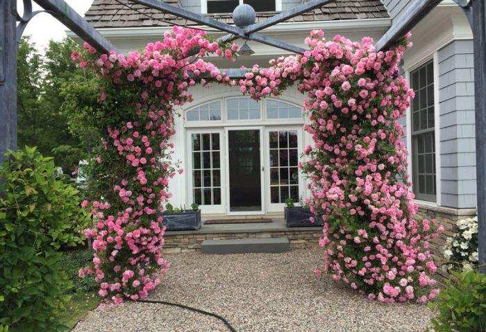Trồng hoa hồng leo trước cổng nhà sẽ mang lại nét đẹp thiên nhiên lãng mạn