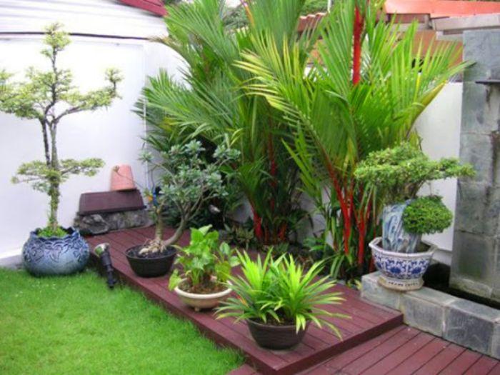 Thiết kế sân nhỏ trước nhà với cây xanh