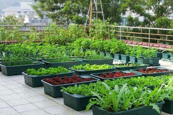 Thiết kế vườn rau xanh tươi trên sân thượng