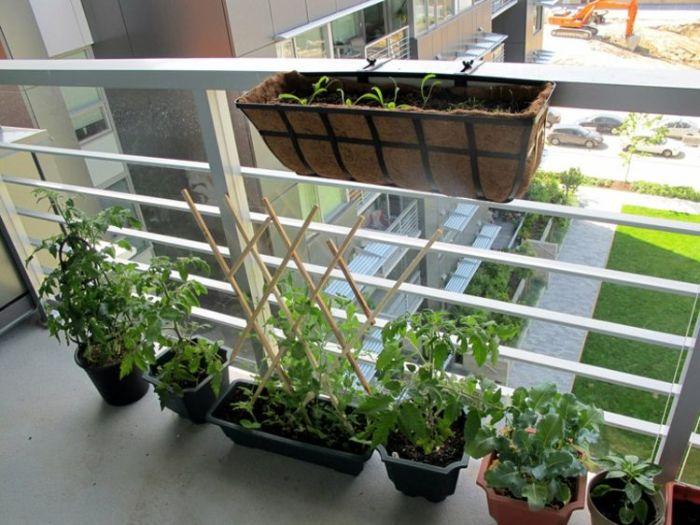 Nhiều gia đình đã tự trồng rau sạch tại nhà trên ban công