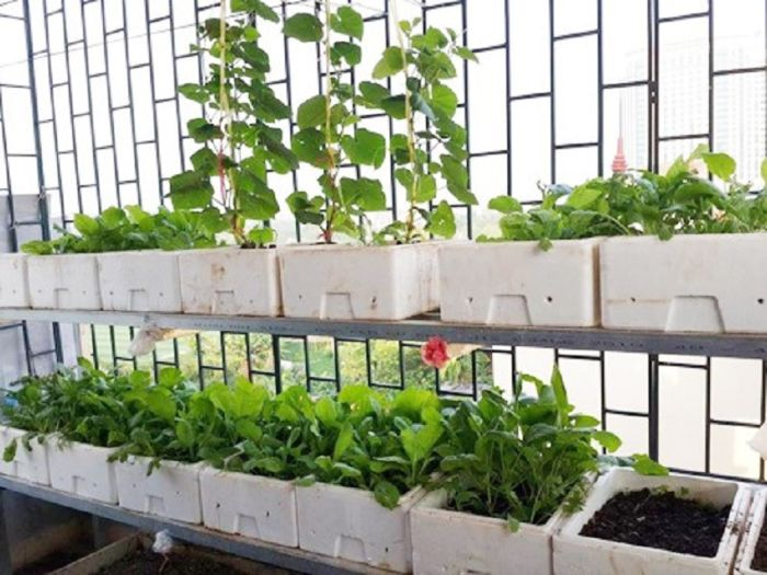 Thùng xốp là vật dụng được lựa chọn để trồng rau ở ban công chung cư