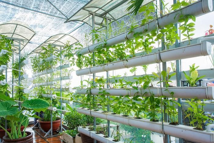 Những ưu điểm nổi bật của hệ thống trồng rau thủy canh vườn treo