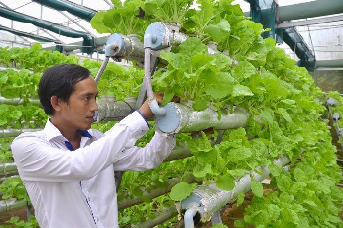 Kỹ thuật trồng rau thủy canh vườn treo khá phức tạp