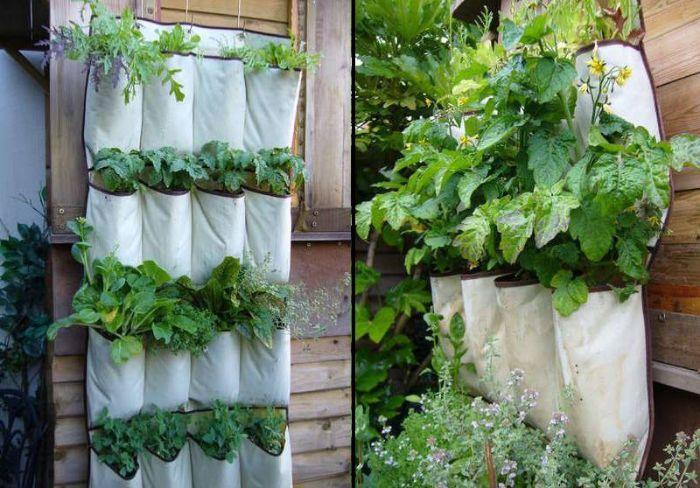 Sử dụng túi trồng rau treo tường có thể trồng nhiều loại rau, củ quả khác nhau